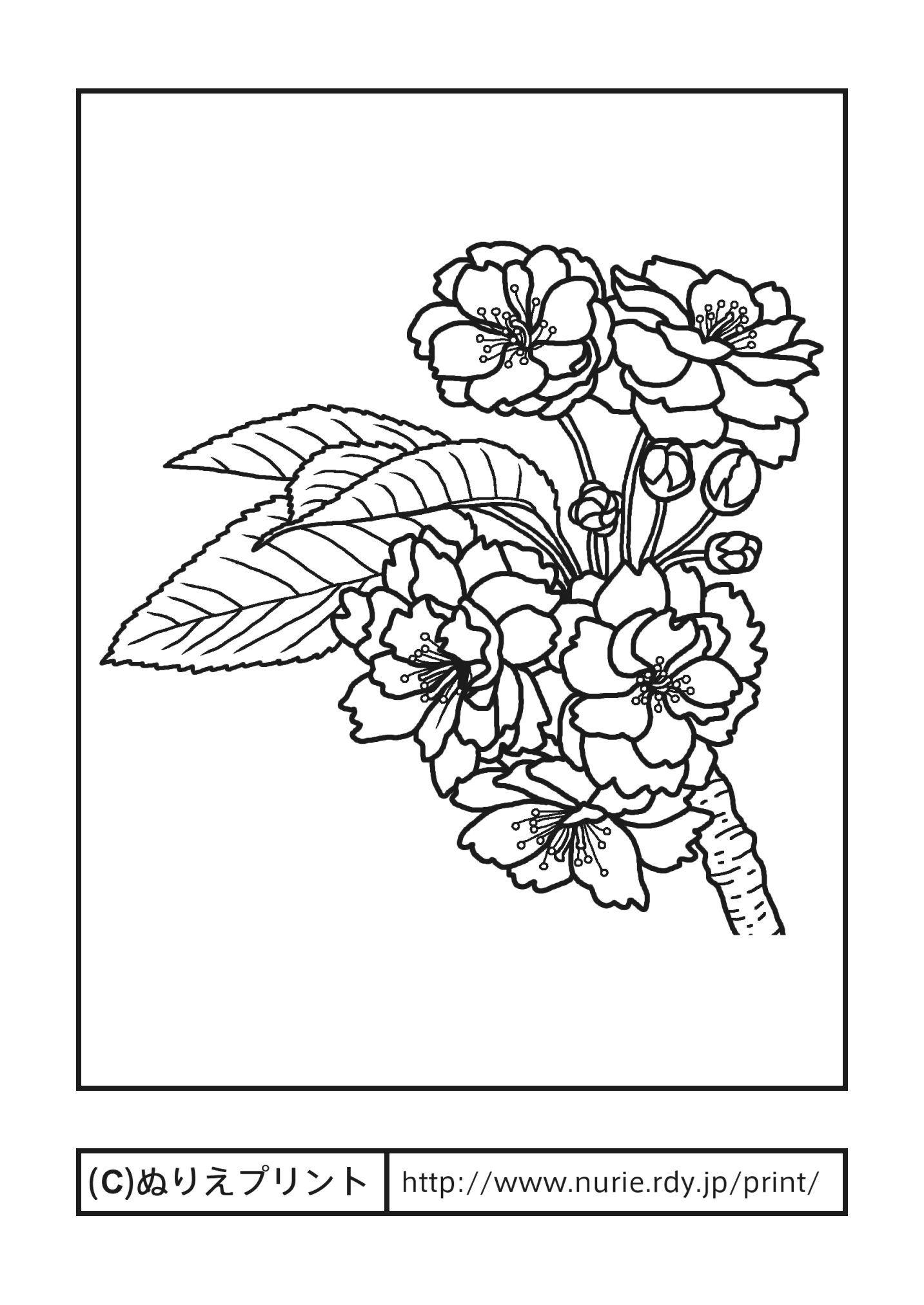 ナラヤエザクラ奈良八重桜主線黒奈良県の花無料塗り絵都道府県