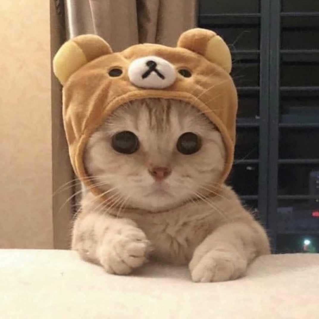Pin On Cute Kittesn