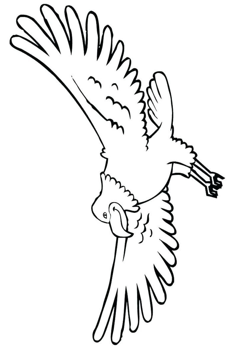 Printable Eagle Coloring Pages Di 2020