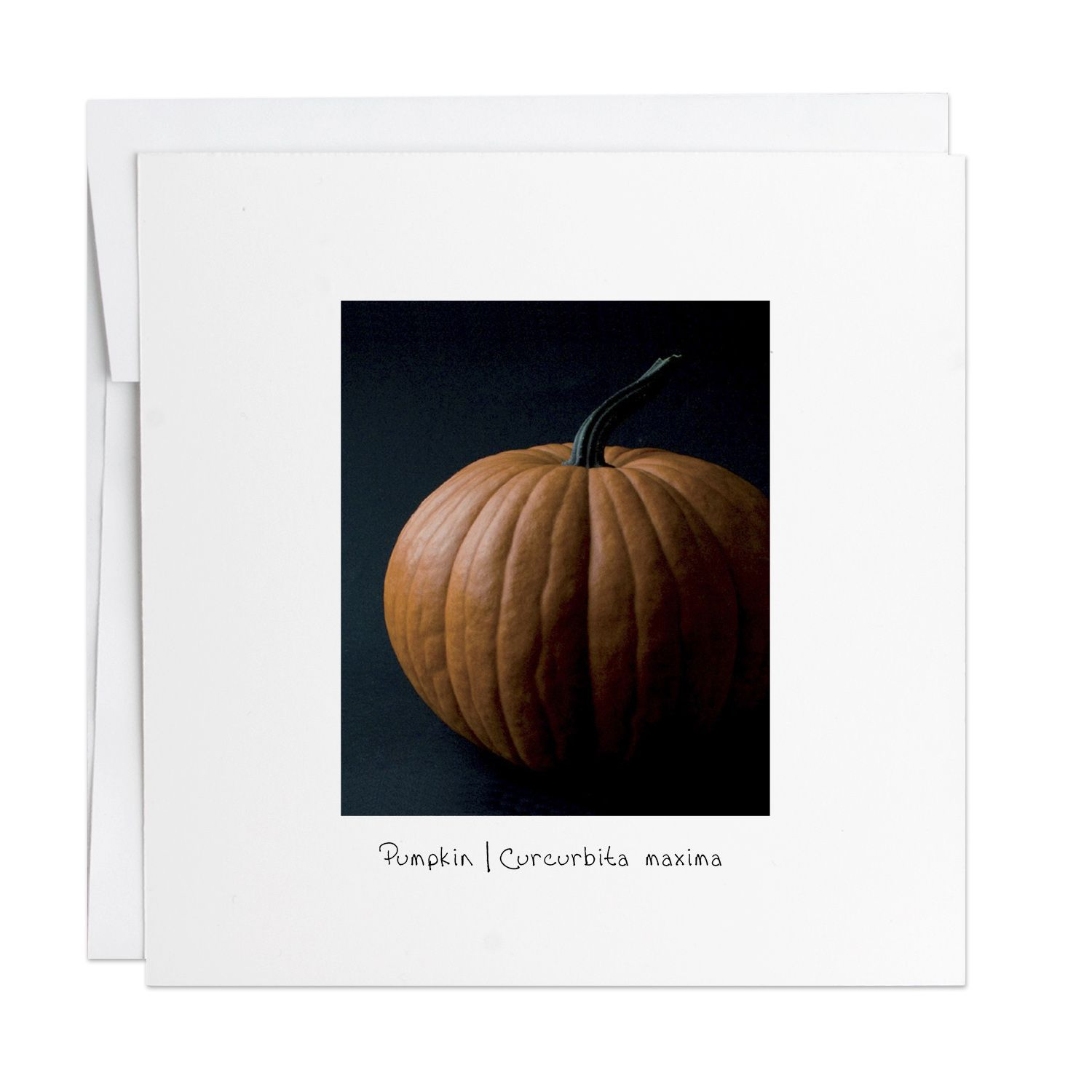 Pumpkin Greeting Card Blank Inside Designed Printed And Built