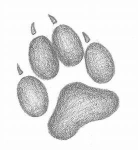 Wolf Paw Print Drawing