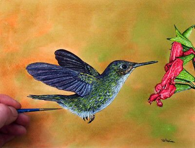 Original Hummingbird painting by Paul Hopkinson. Illustration watercolor art which captures every detail of the bird and the flower.  I love painting wildlife painting and capturing birds in my artwork.  I am a realistic artist and work with a tiny brush as you can see! #PaulHopkinson #TheDevonArtist #hummingbirdpainting #birdpainting #wildlifeart #watercolourart #watercolorart #illustrationart #realisticart #realisticbirdpainting #beautifulpaintings #colourfulpaintings #naturecrafts
