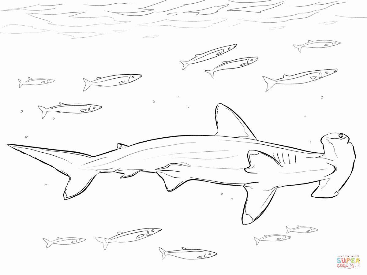 Hammerhead Shark Coloring Page Lovely Hammerhead Shark