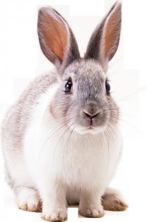 3056867065 1 3 8qlbjbcs Gif Photo By Miras46 Rabbit Pictures Rabbit Png Pet Rabbit Care