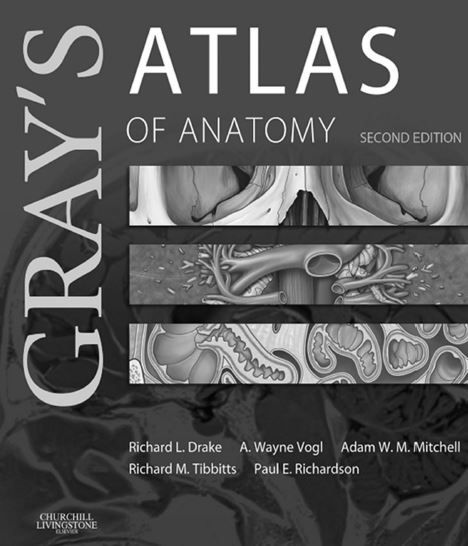 Grays atlas of anatomy 2nd editioneg pixels atlas grays atlas of anatomy 2nd editioneg fandeluxe Choice Image