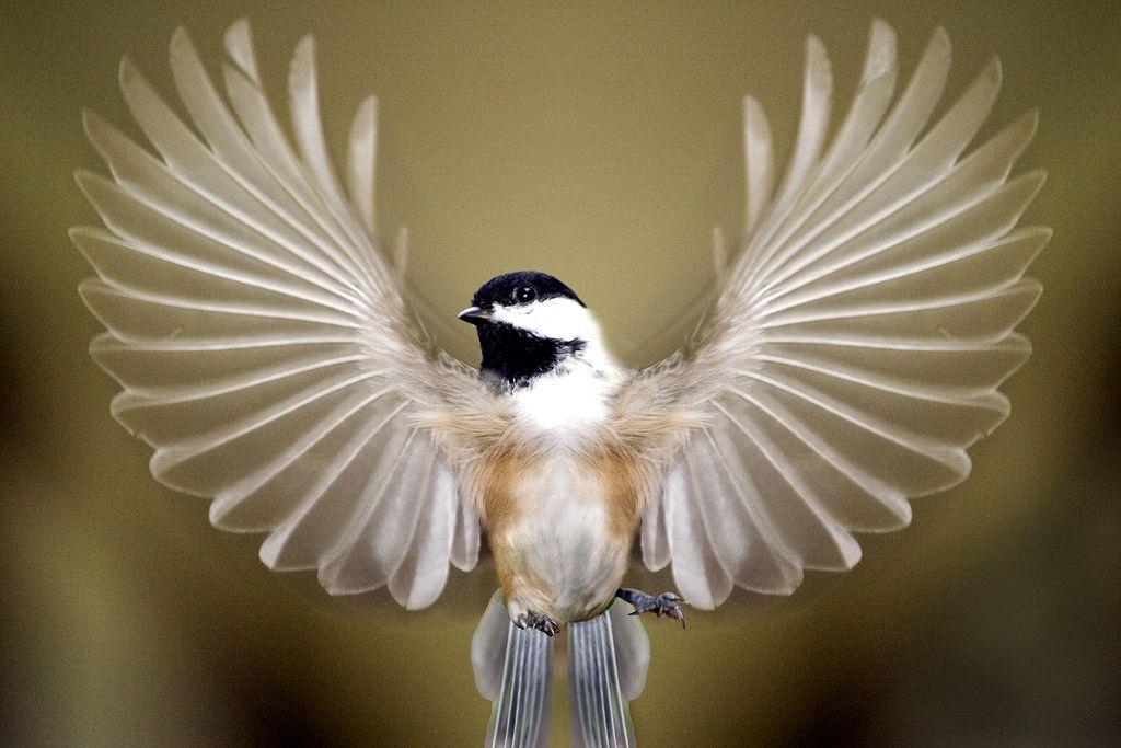 bird wings spread - 1024×683