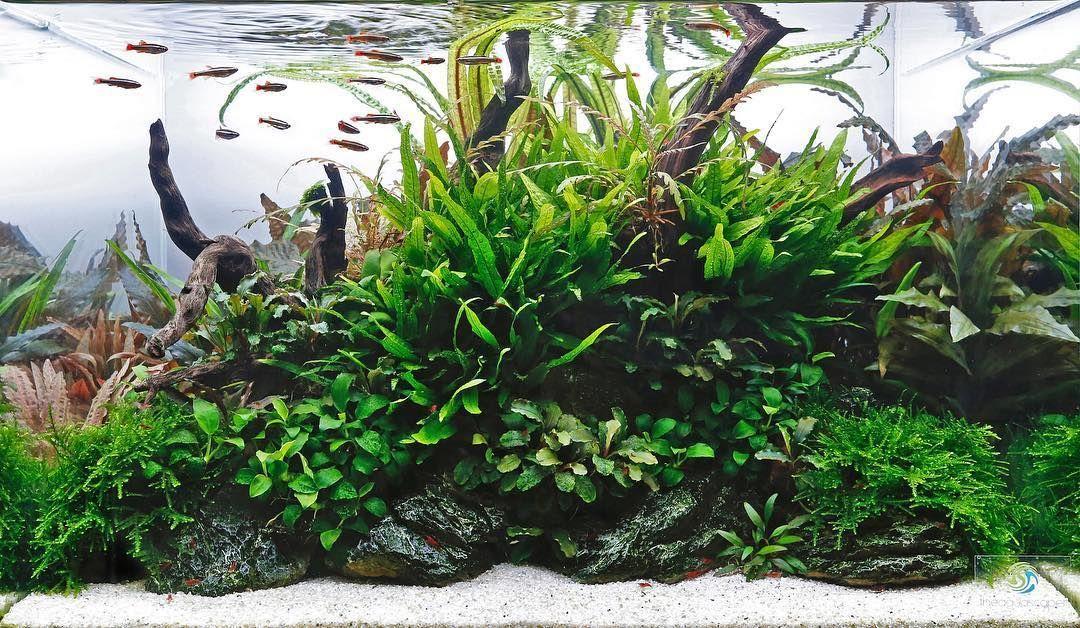 Beautiful Freshwater Aquarium Tank That Is Easy To Create And Maintain Freshwater Aquarium Plants Plants Planted Aquarium