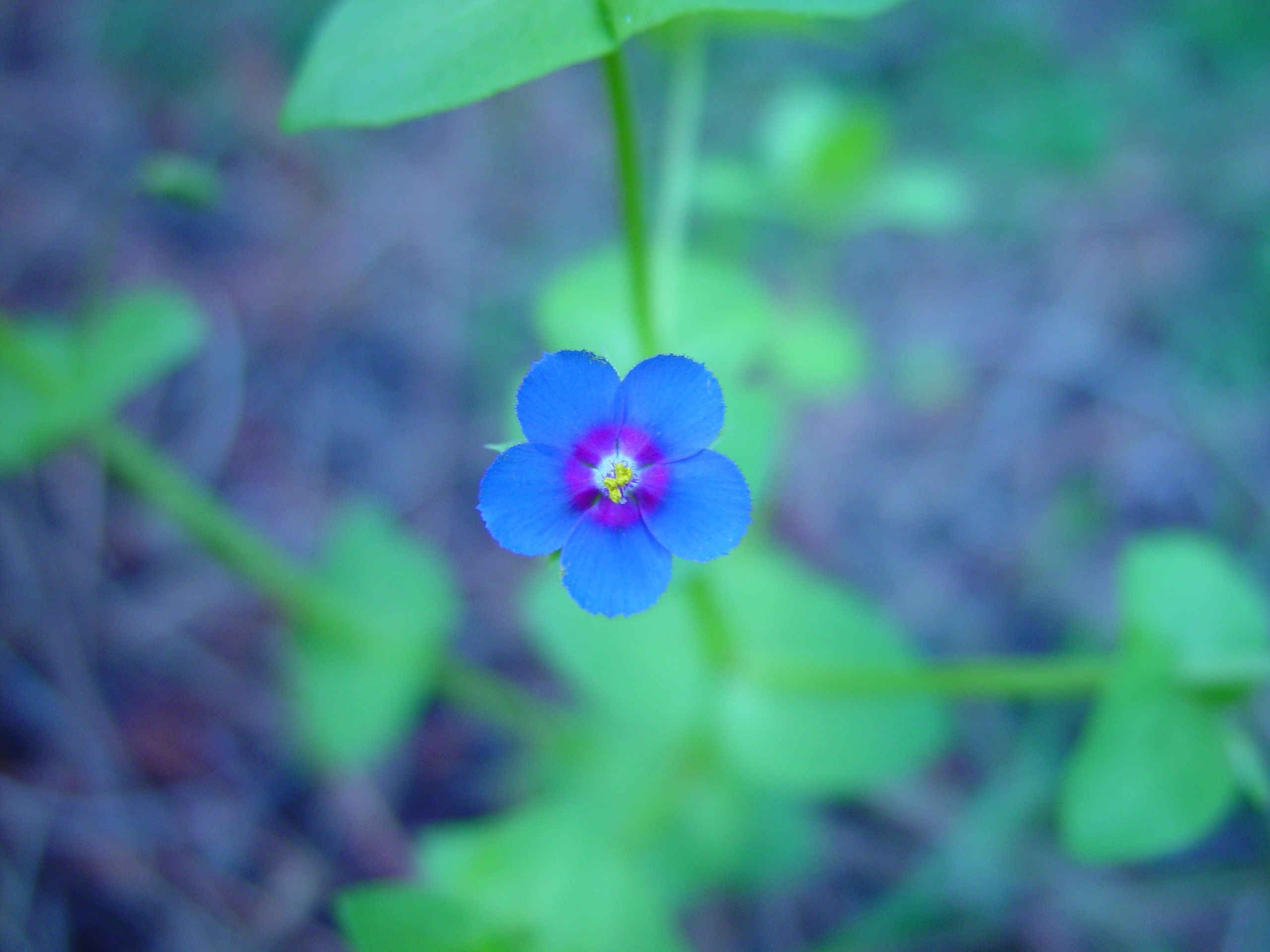 Small Blue Flower Jpg 2560 1920 Blue Flower Names Flowers Names And Pictures Blue Flowers