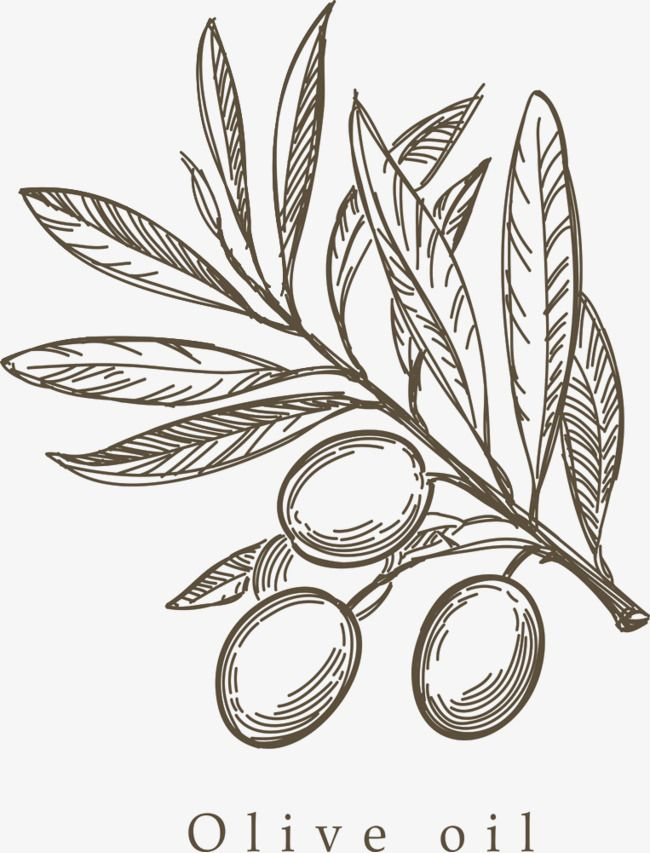 Hand Painted Olive Branch Png And Clipart Olive Tattoo Nature Art Painting Olive Branch Tattoo