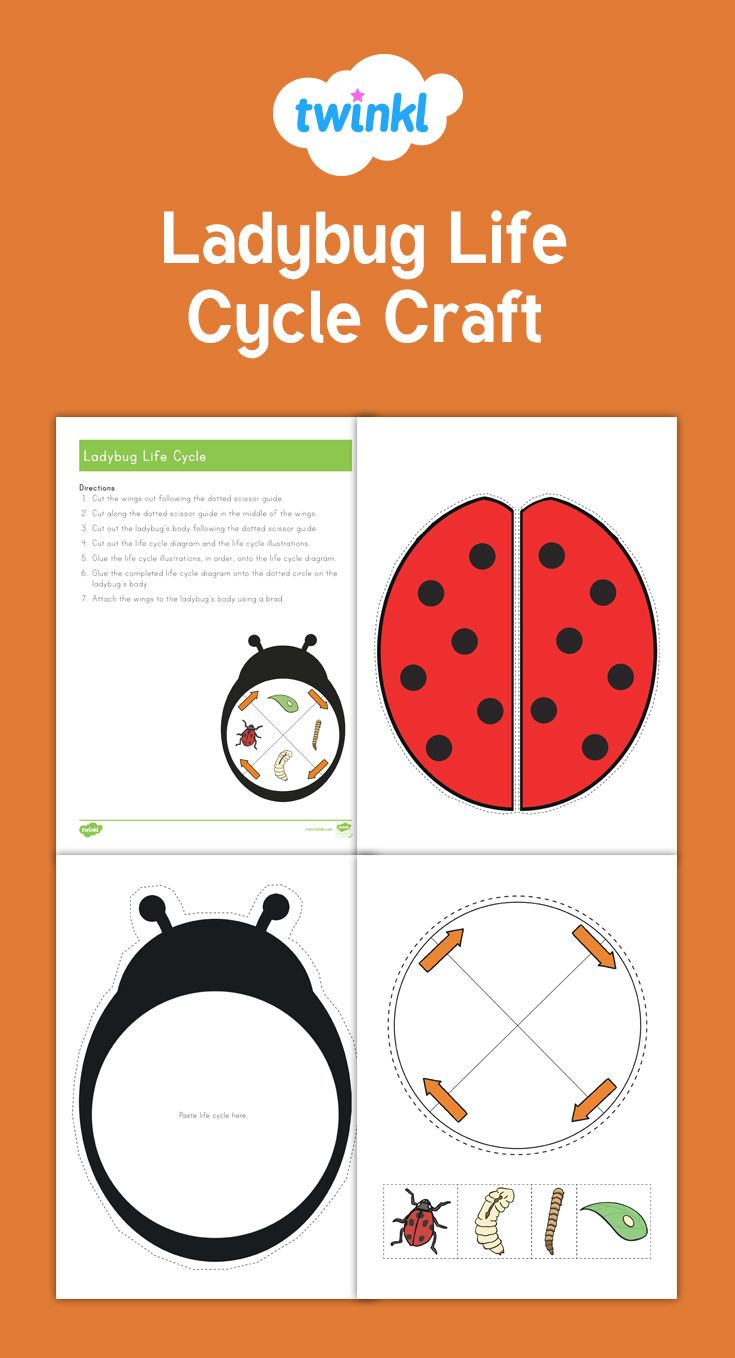 This is a fun craft that teaches children about the life cycle of this is a fun craft that teaches children about the life cycle of a ladybug pooptronica Gallery