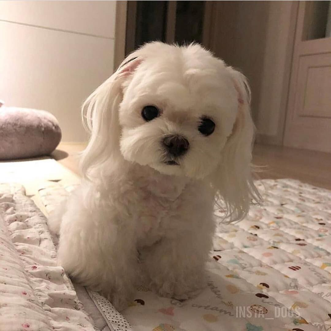 Meet Sunsim Tag Your Friends Follow Pet Addict Sun Sim