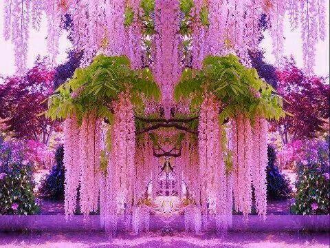 Pink Wisyeria