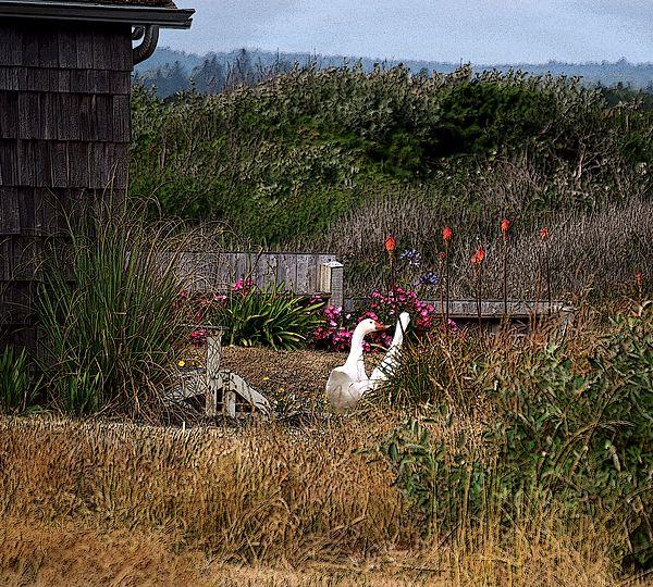 #Goose Mates At #Bandon #Beach, #Oregon by Michele Avanti #summer