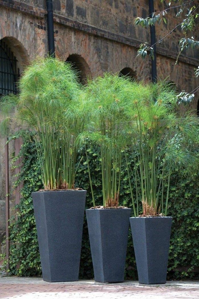 sichtschutz pflanzkübel kreative und schöne gartenideen mit - gartenideen