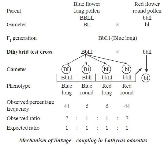 Dihybrid Test Cross For Linked Genes Non 1 1 1 1 Ratio