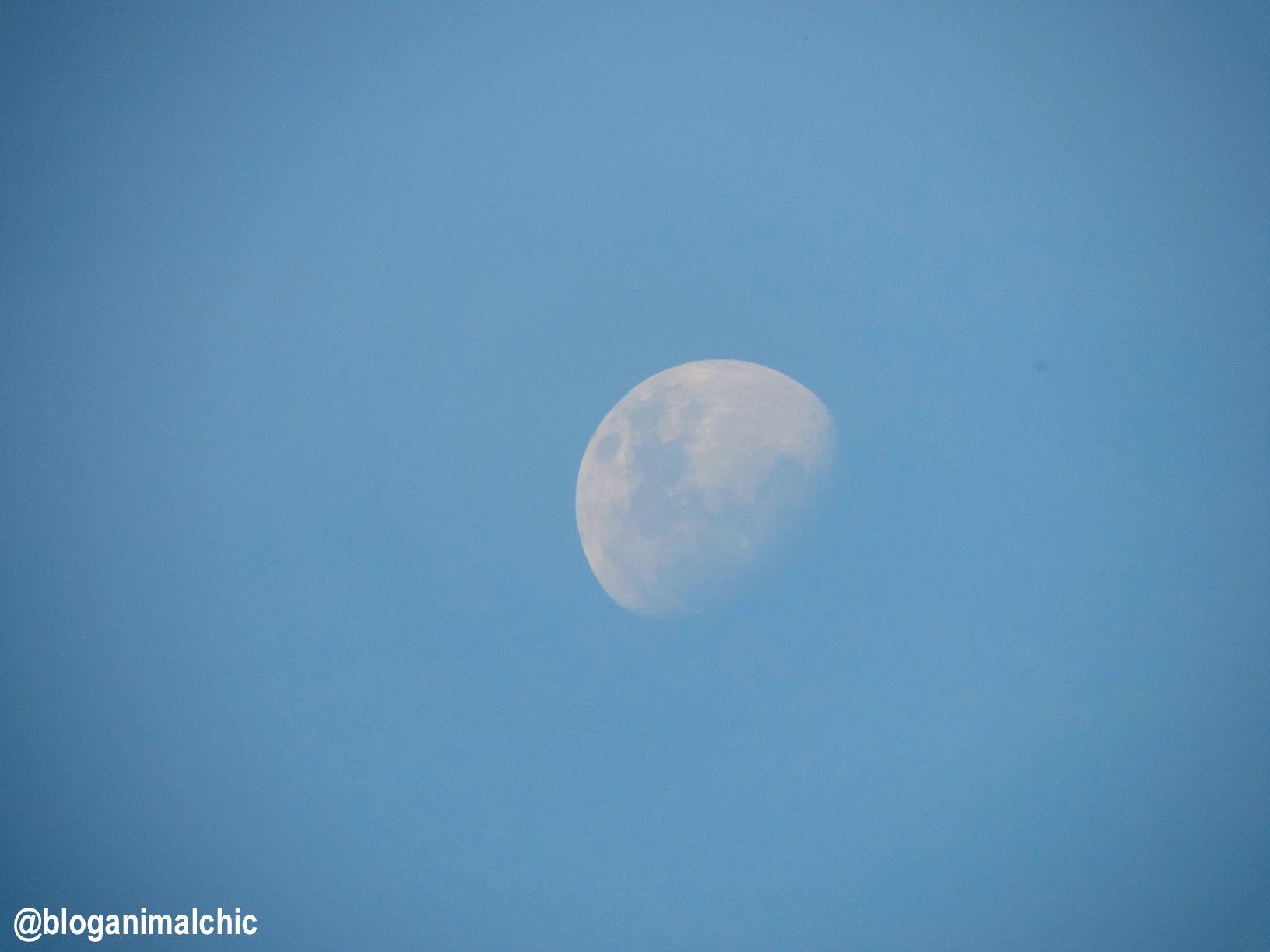 Lua em Inhotim, Brumadinho/MG em Abril/14.