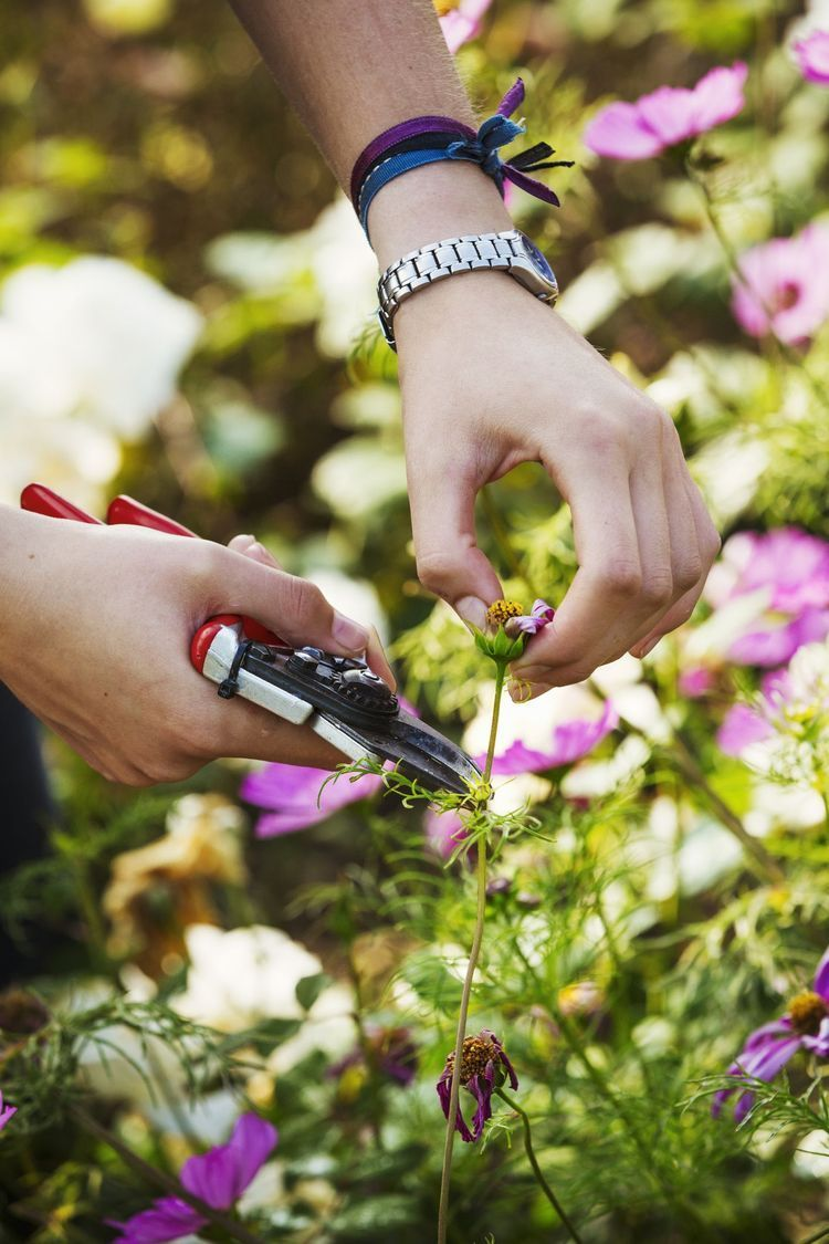 What Does Deadheading Flowers Mean And Why Do I Have To Do It