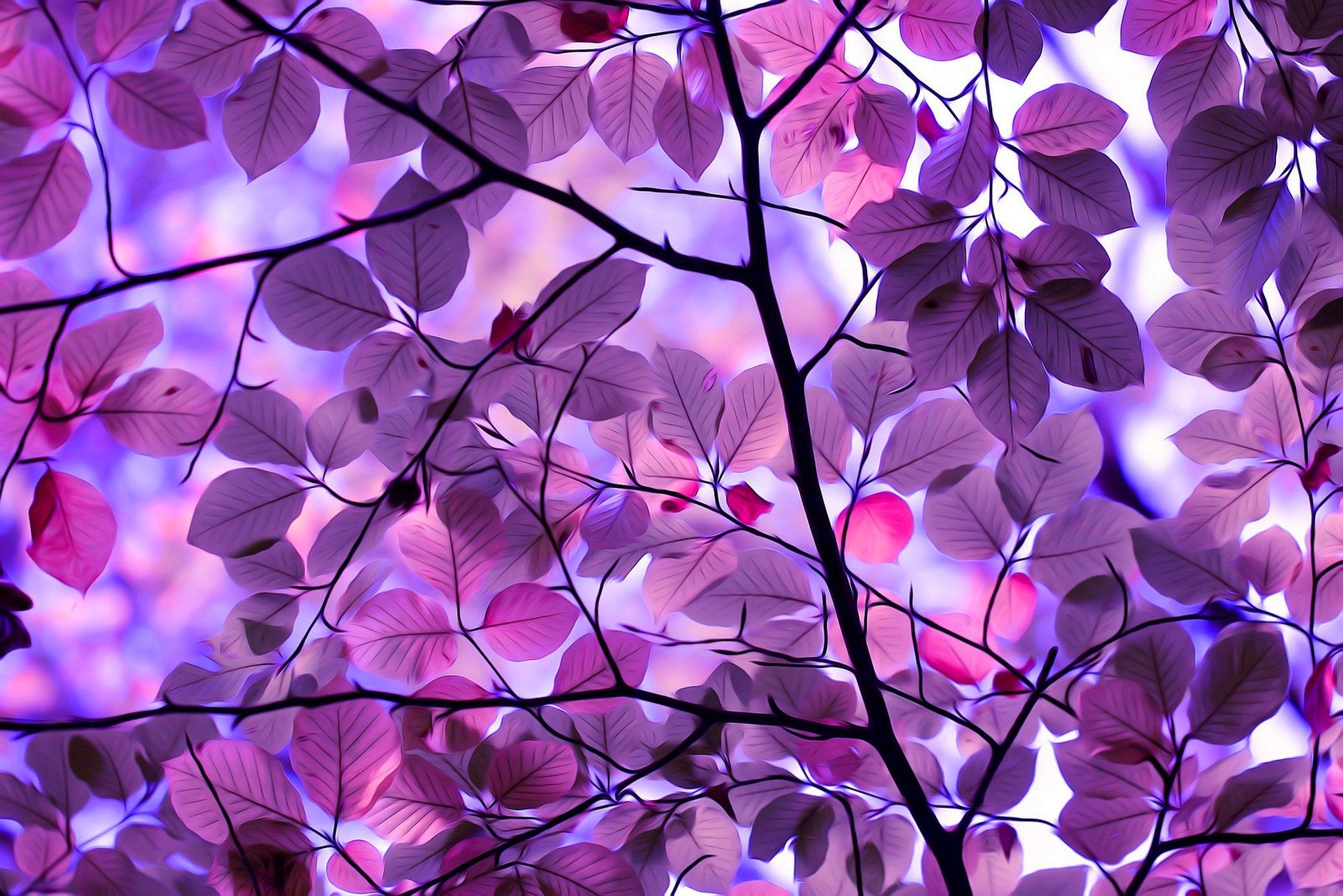 Spring Color Schemes Purple Leaves Wallpaper Free Nature Wallpapers