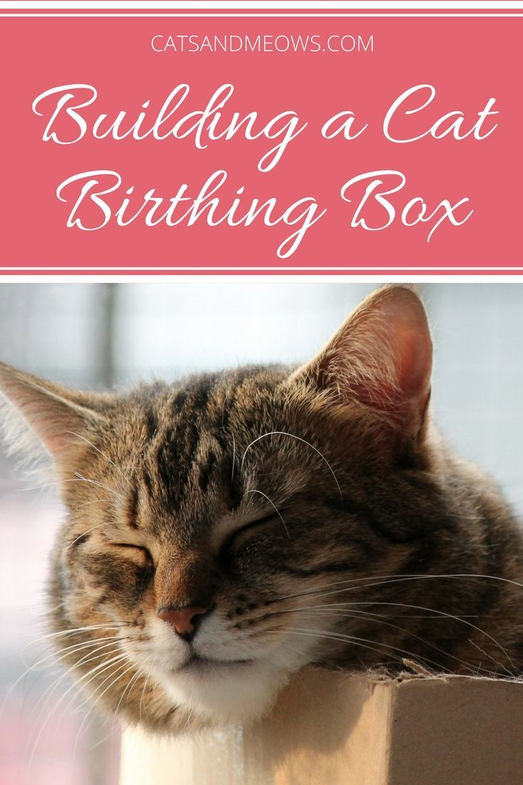 How To Build A Cat Birthing Box Cats And Meows Pregnant Cat Cat Birth Cat Care
