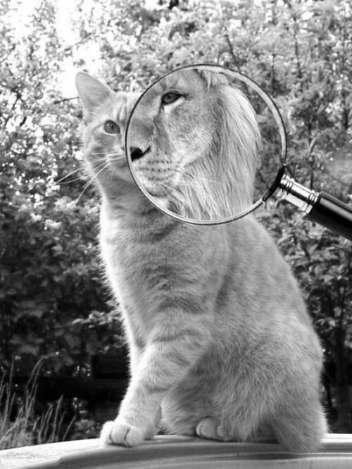 #cat #kitty #cute #sweet #beautiful #animal #black&white
