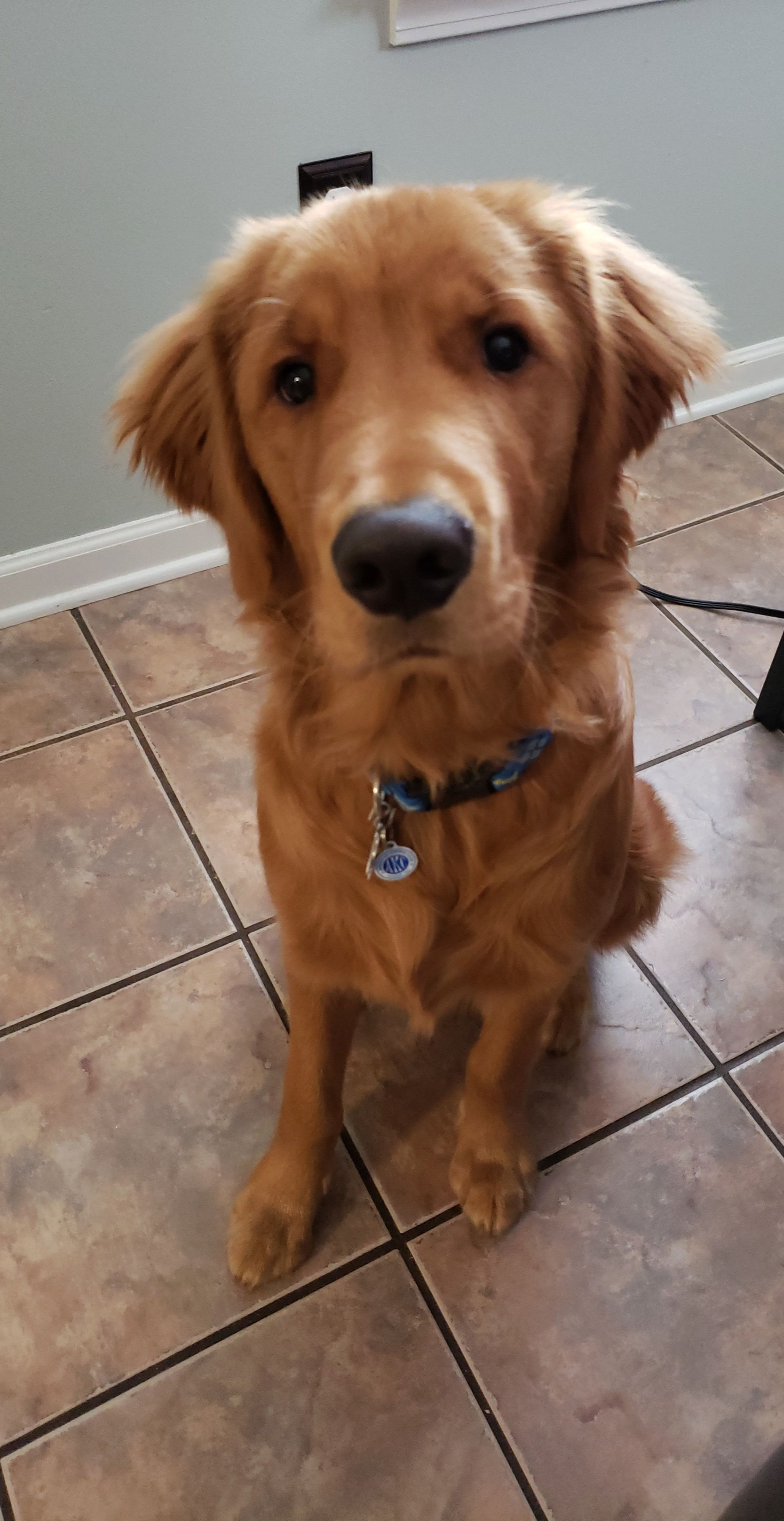 This Is My Boy Remy He S 7 Months Old Today