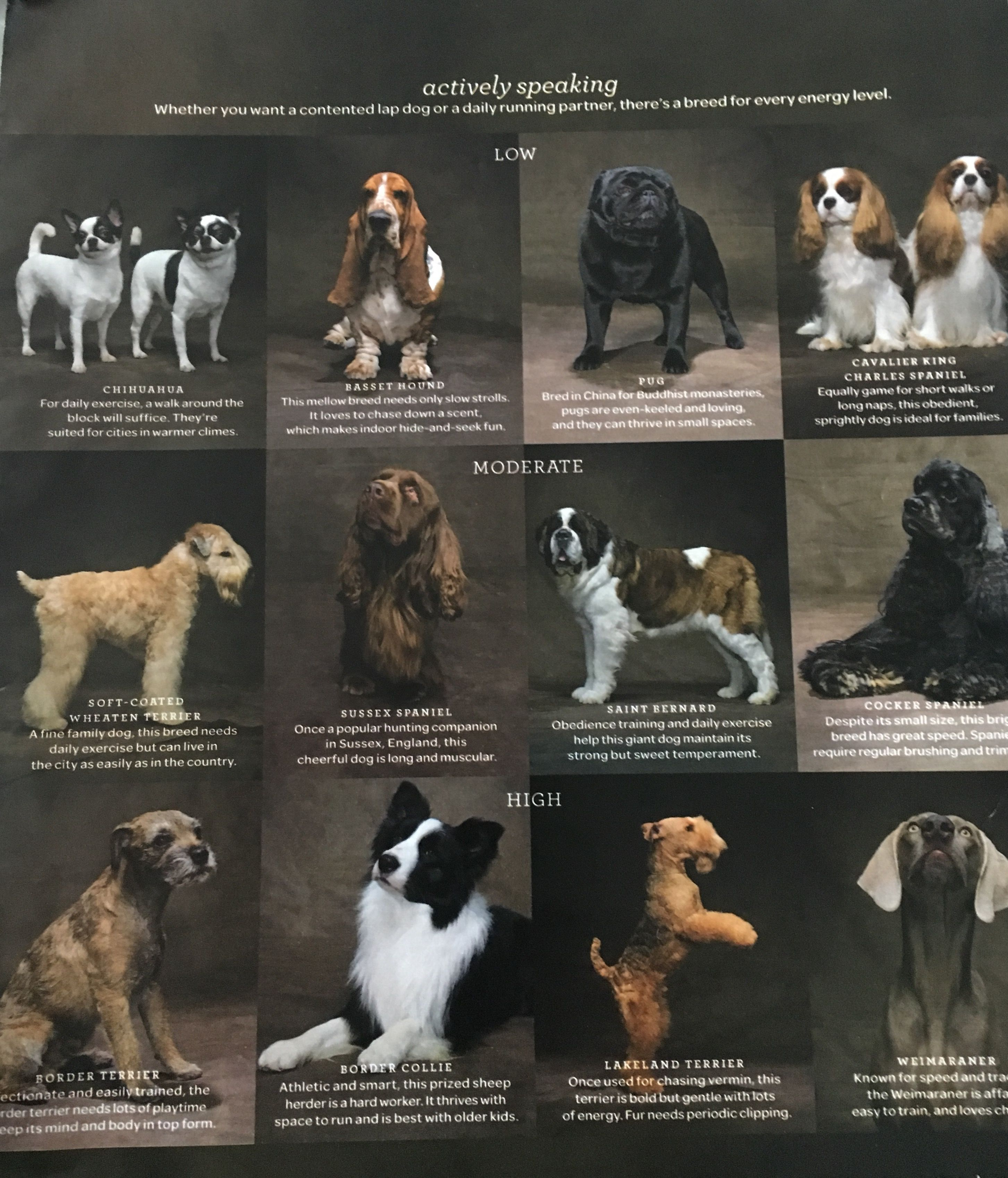 Every Dog Breed Image By Wendy Shinar On Sweet Baby