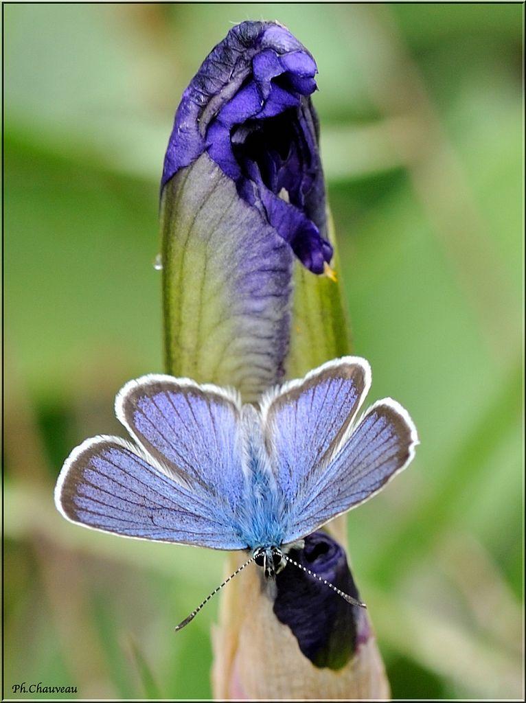 L'iris et le papillon (the iris and the butterfly)