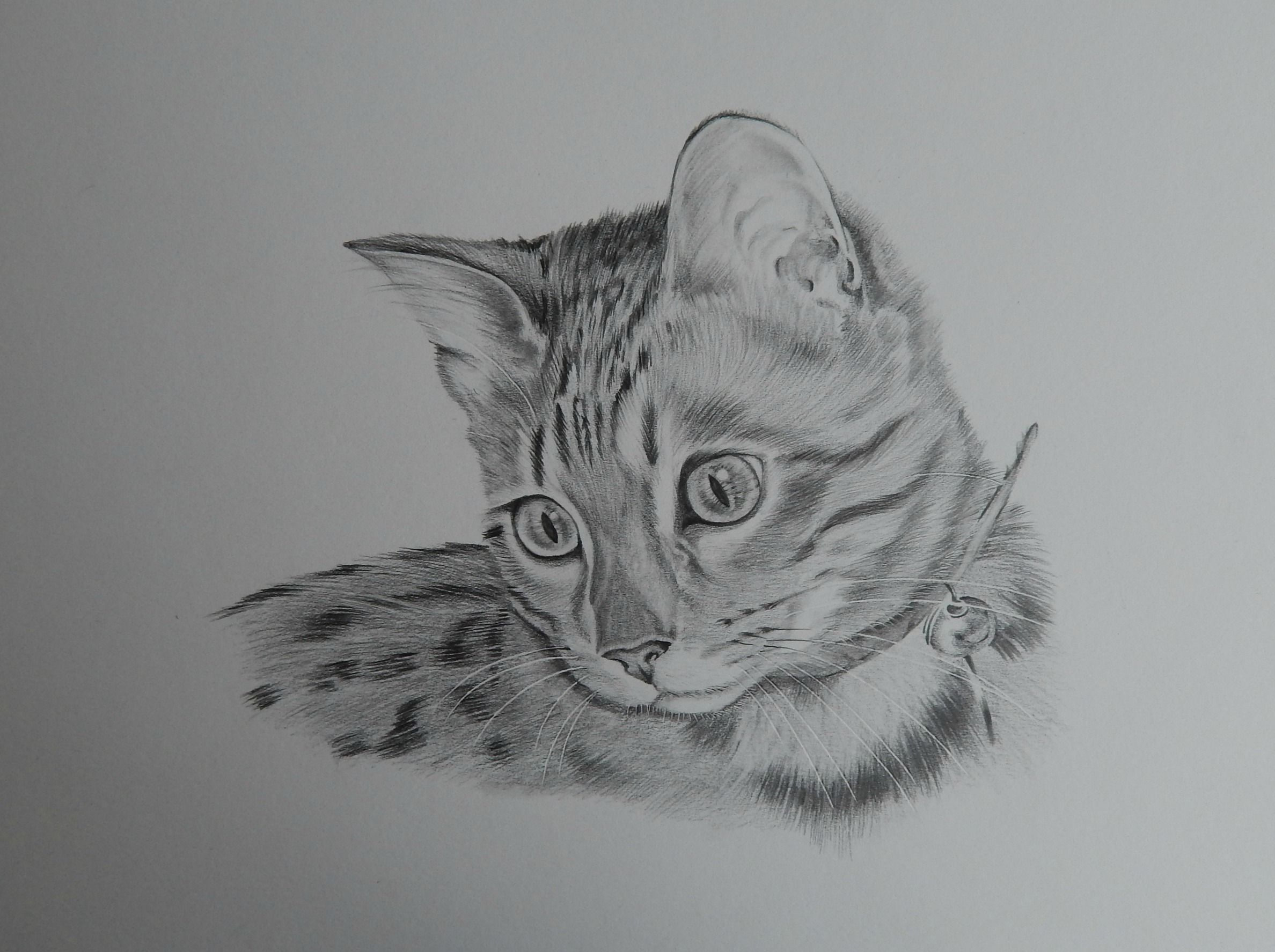 Pencil drawing of bengal kitten