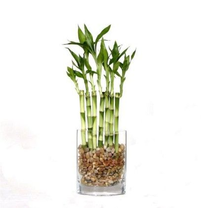 Bamboo Best Office Plants   SnapSuites Boston Back Bay Executive Office  Space