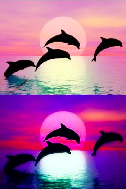 Dolphins Making A Heart At Sunset