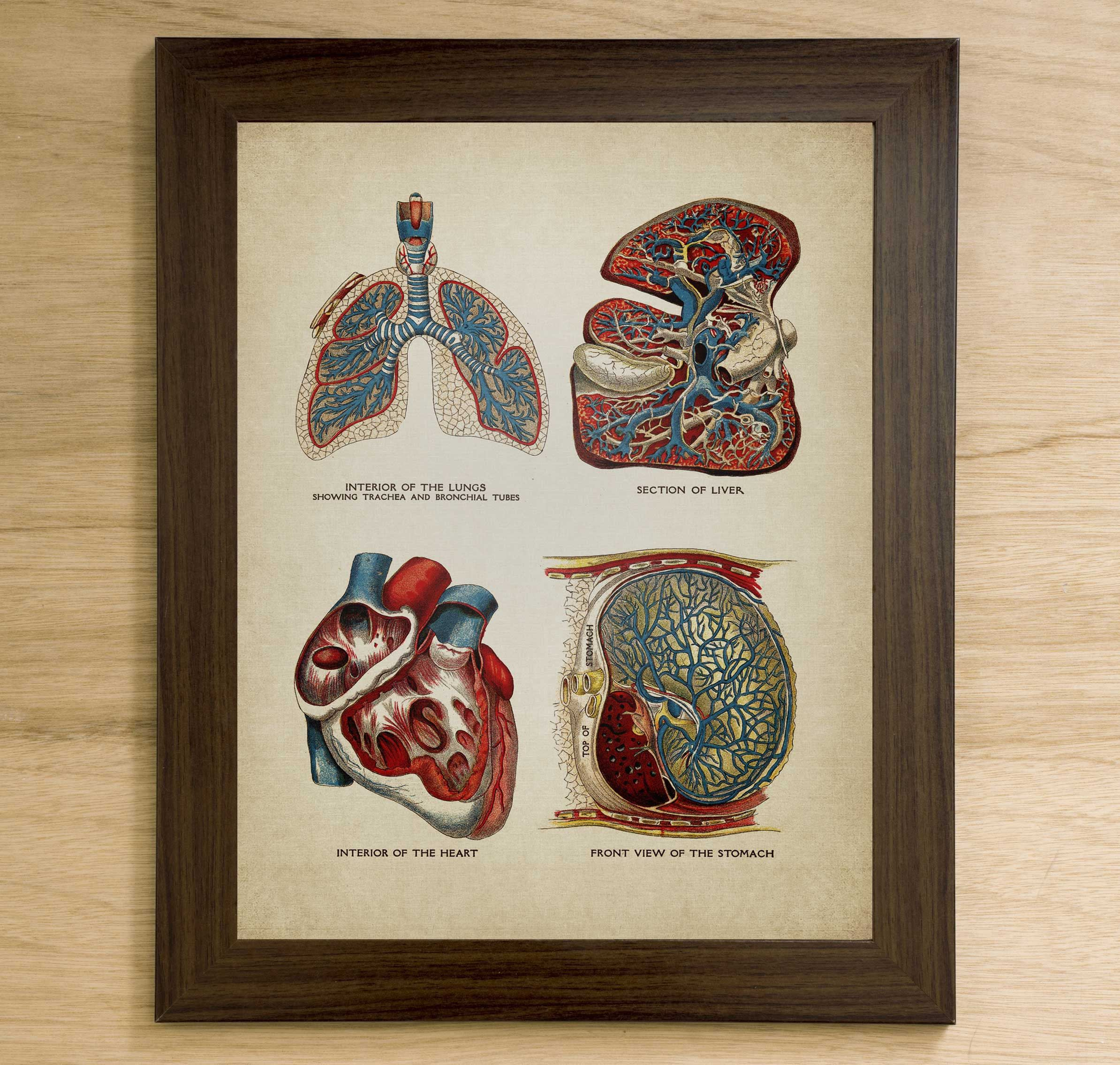 Anatomy print wall art instant download printable home decor