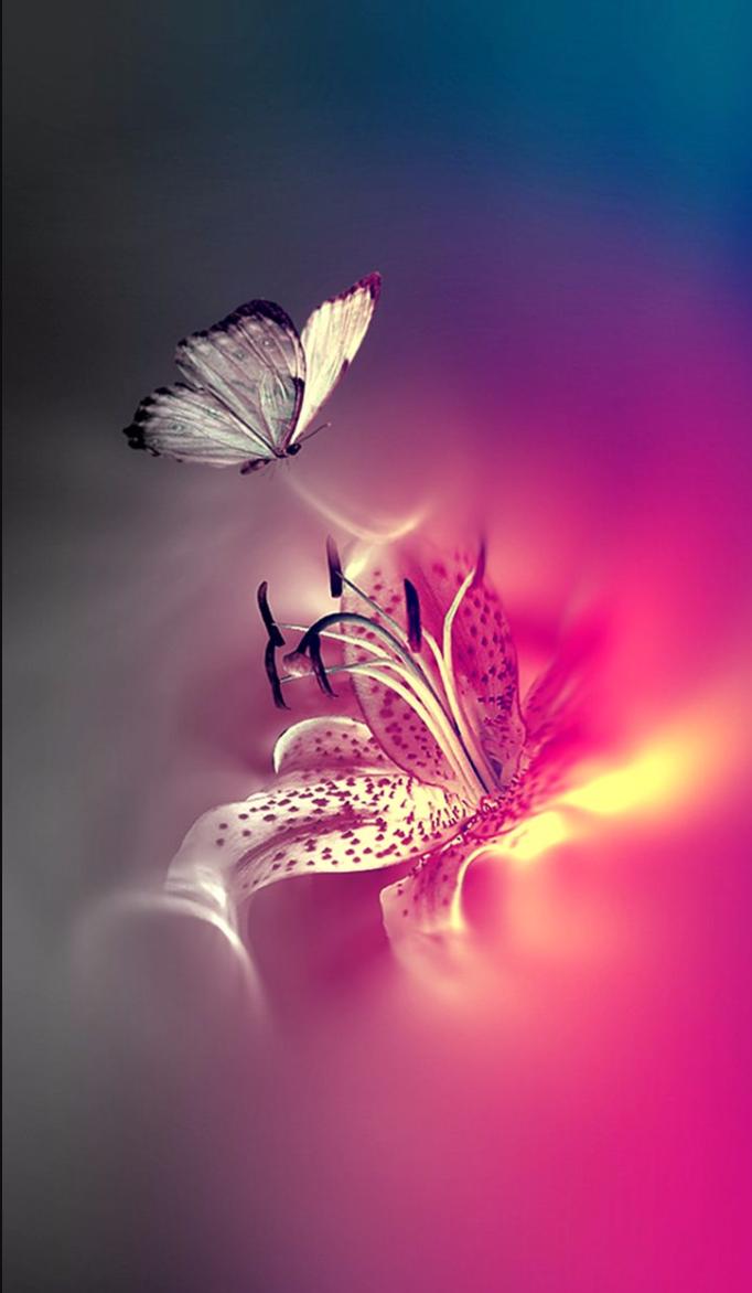 épinglé Par Céline Le Sur Papillons En 2019 Fond Ecran Zen