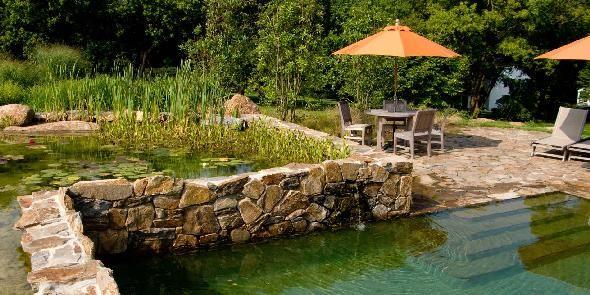 natural swimming pool. natural swimming pool pond aquatic plants ...