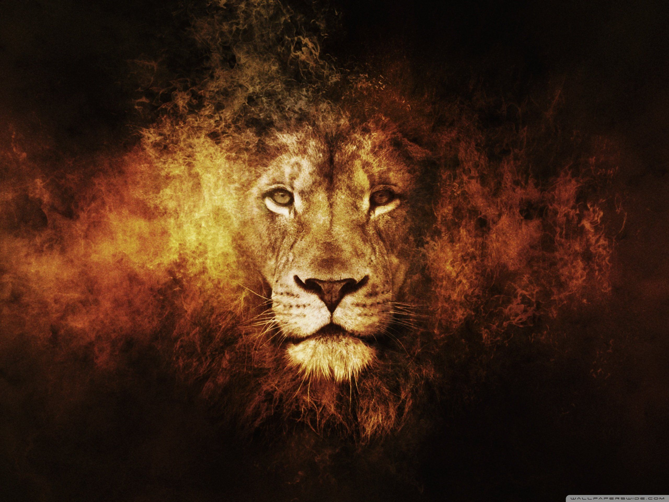 Foundation 5 background image - Jpg 2560x1920 Lions In Smoke Background