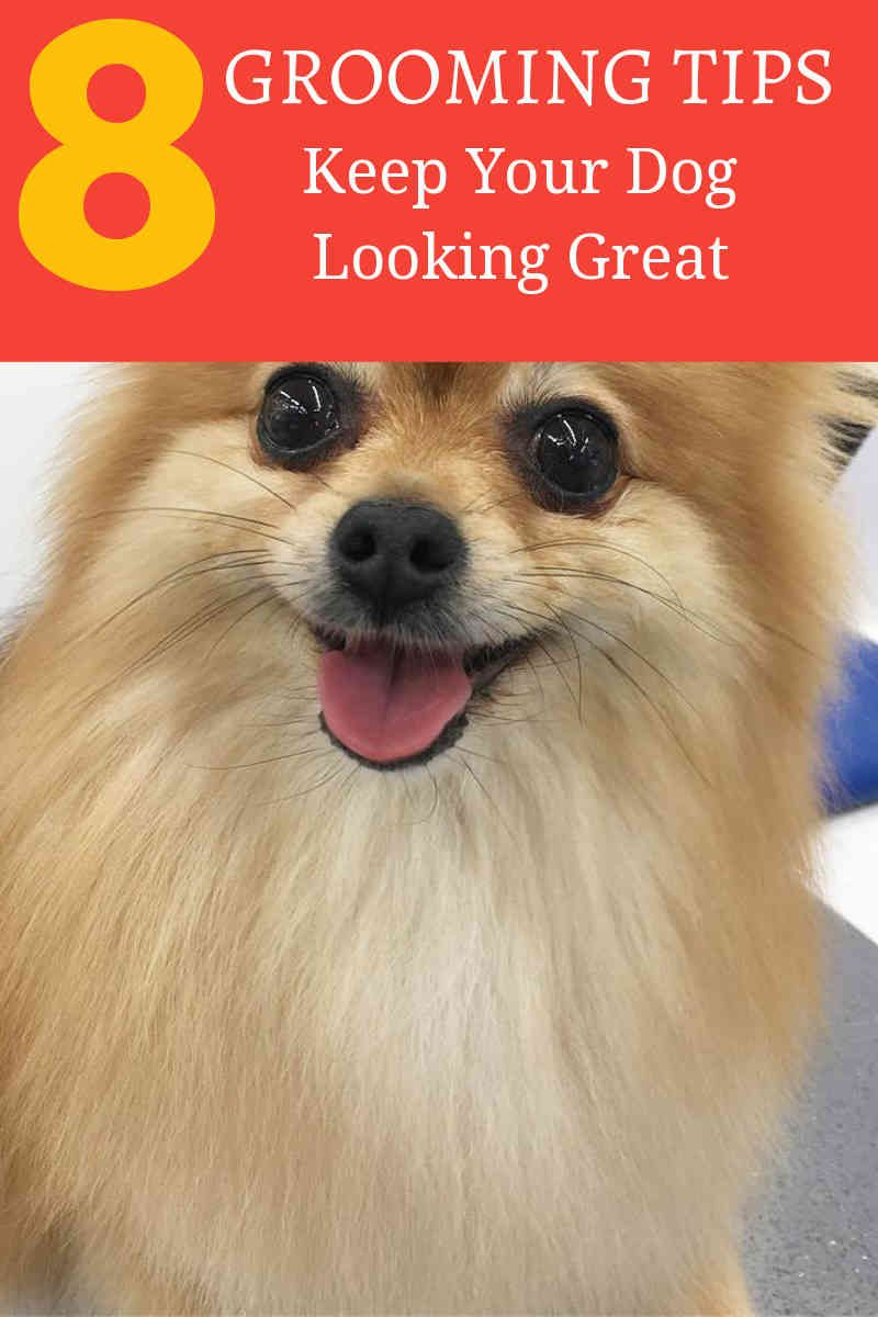 How To Choose Your Dog Grooming Shears Dog Grooming Tips Dog