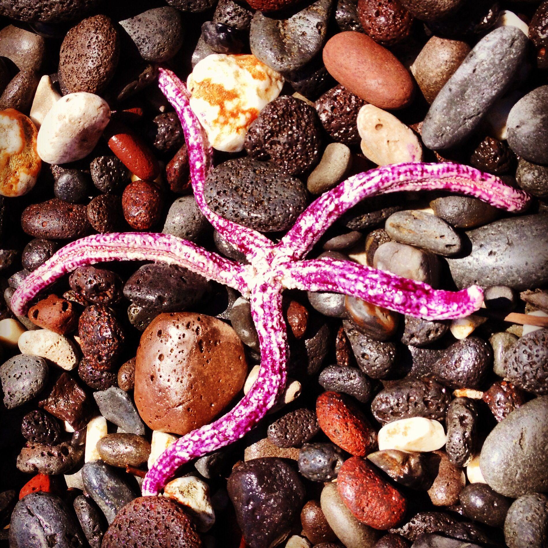 Maui purple starfish