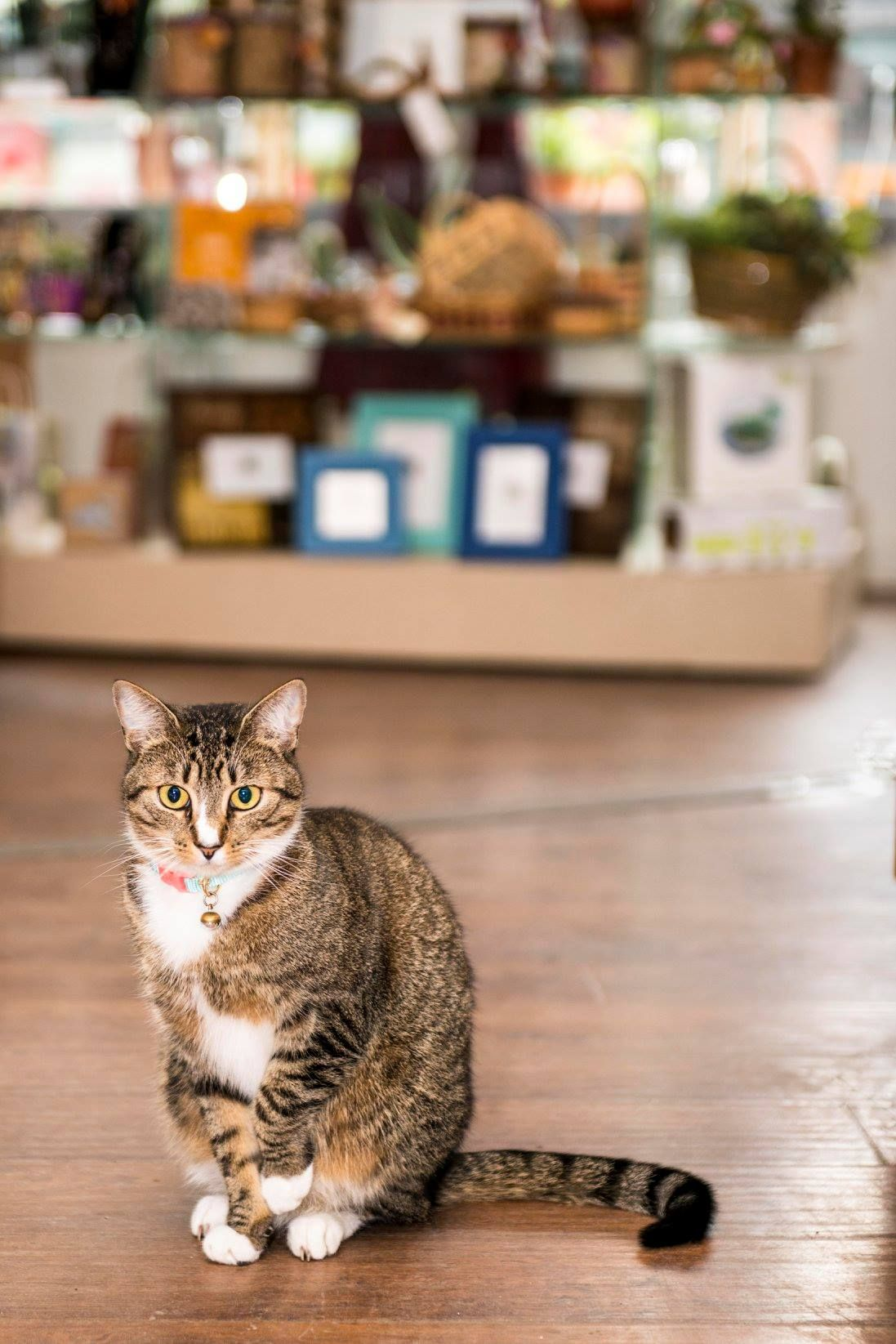 Vermont S First Cat Cafe Cat Cafe Cats Cat Lounge