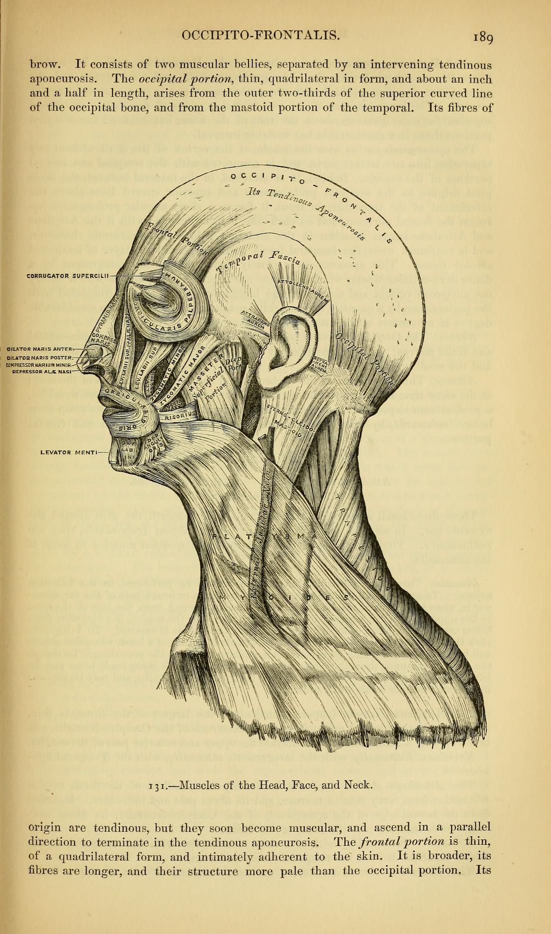 Anatomy : descriptive and surgical | scientifico magnifico ...