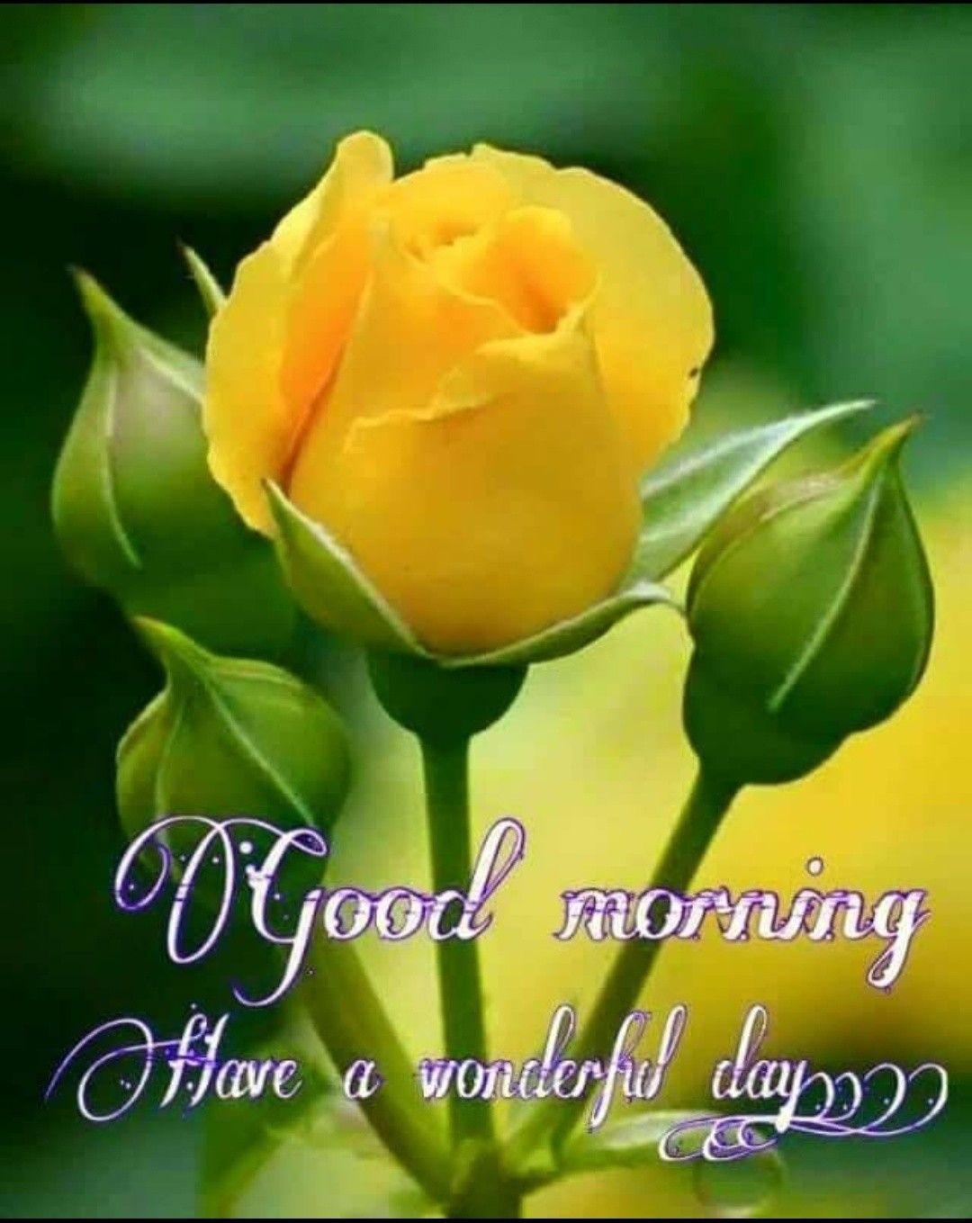 Hello Lovely Ladies Morning Pinterest Morning Images