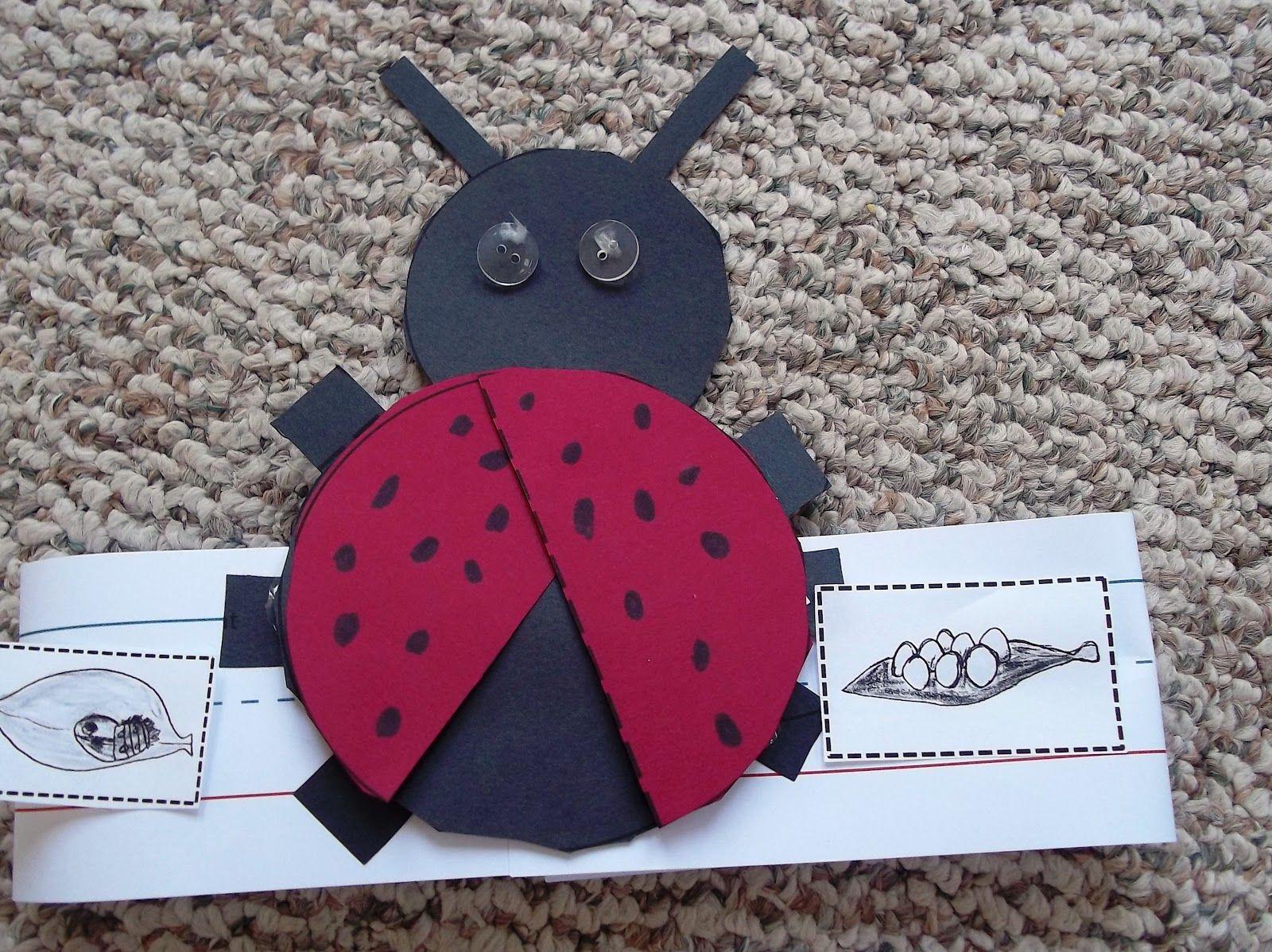 Ladybugs, ladybugs and more ladybugs! #CampSunnyPatch
