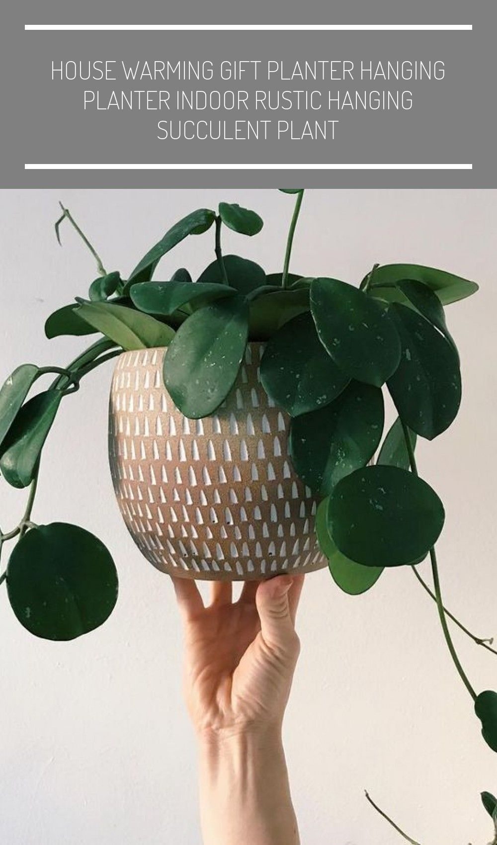 Add color and texture to your small space with living plants #xtraroom #smallspa #cactus plants houseplant #cactus plants houseplant