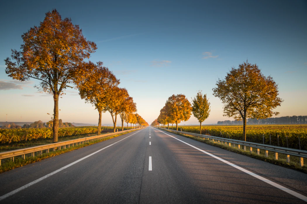 Long Straight Road With Trees On The Side Photo Free Road Image On Unsplash Road Trip Photo