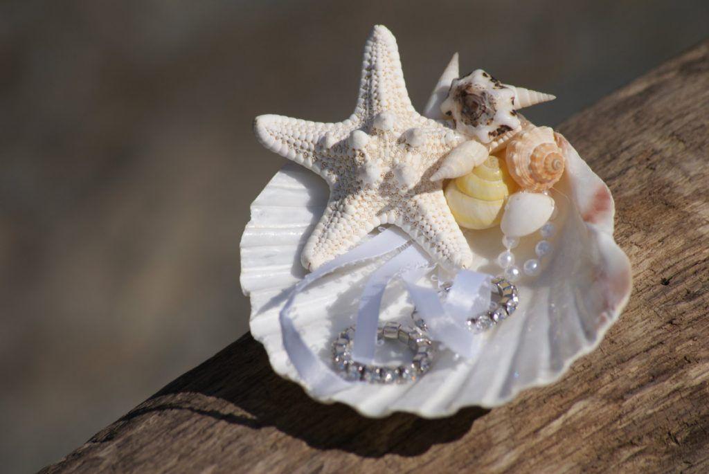 Seashell Ring Holder Wedding Decor Pinterest Wedding ring