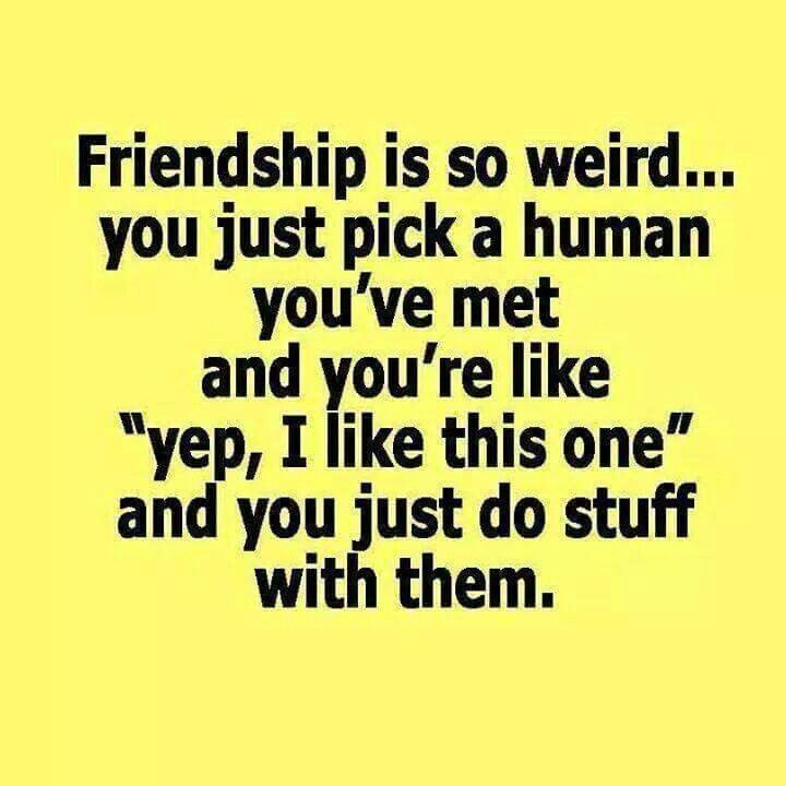 Explore Funny Friendship Quotes And More!