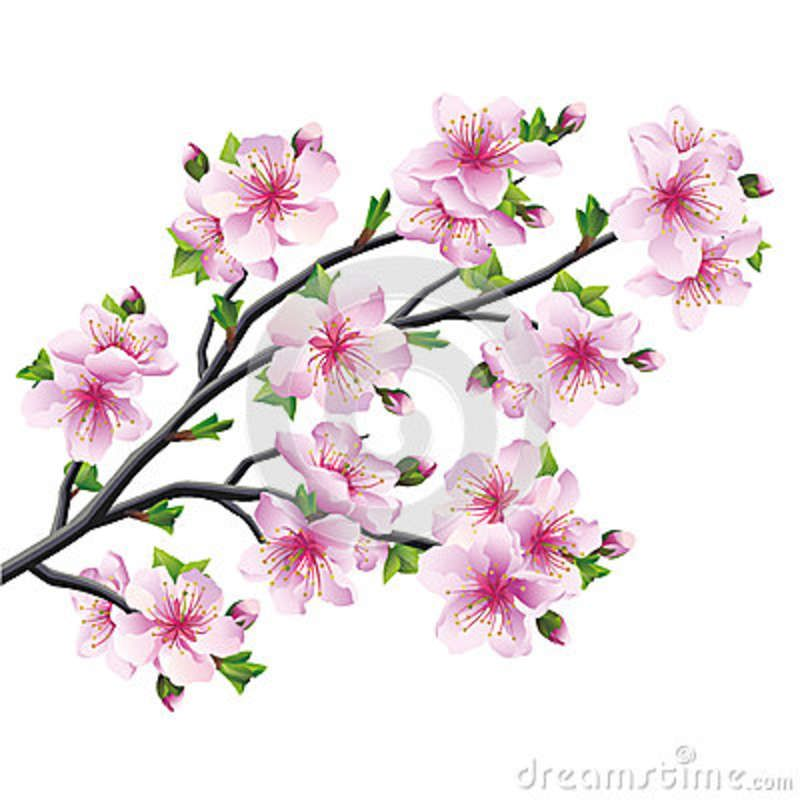 Japanese Tree Sakura Cherry Blossom Isolated Cherry Blossom Drawing Cherry Blossom Tattoo Cherry Blossom Branch