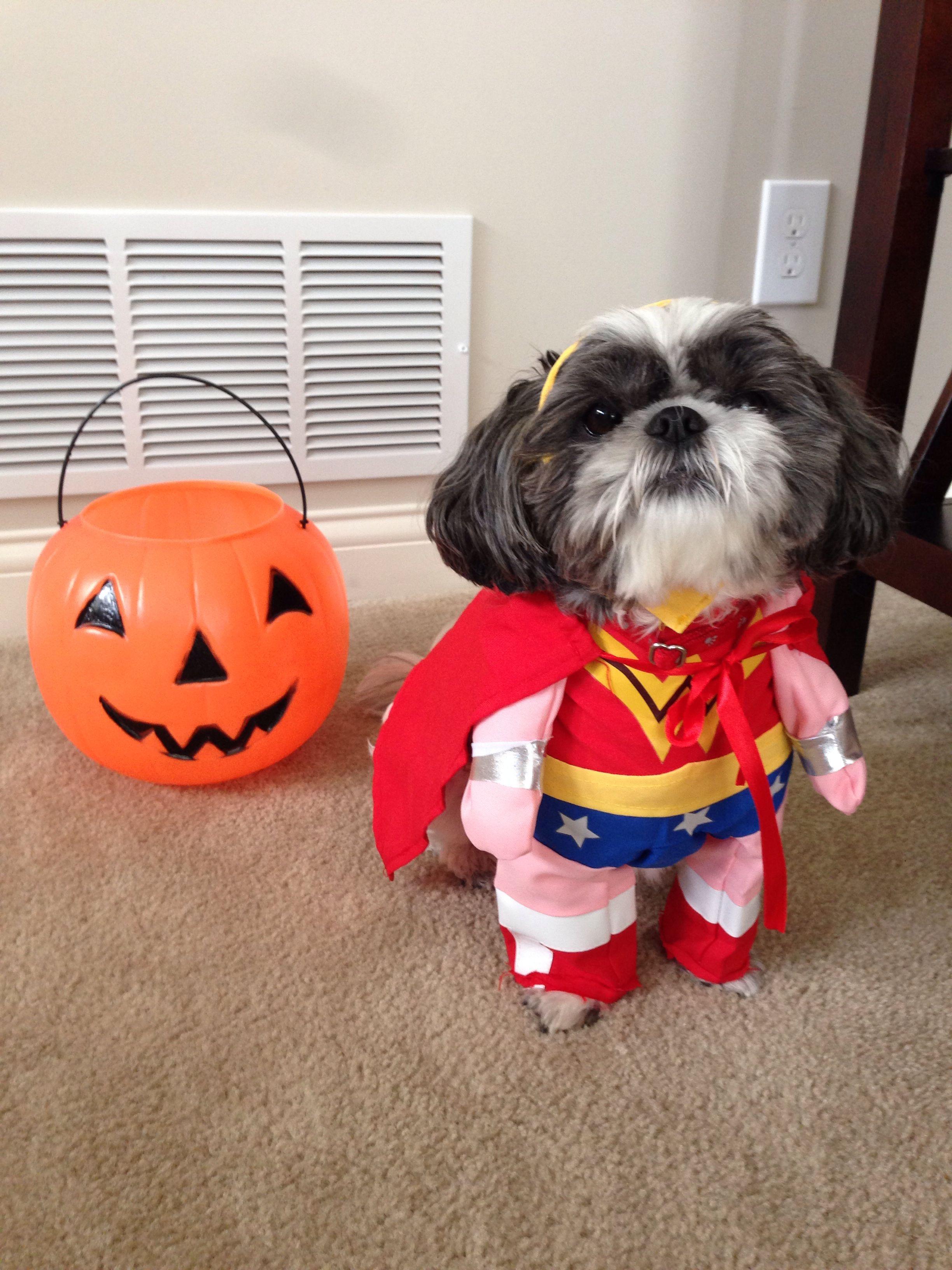 Halloween Dog Costume Dog Costume Shih Tzu Wonder Woman