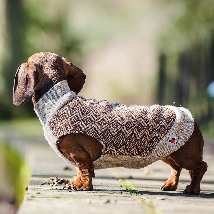 Zig Zag Jumper In Brown With Images Red Dachshund Dachshund