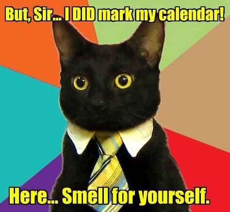 Meanings Of Month Day Names Business Cat Business Cat Meme Funny Cat Memes