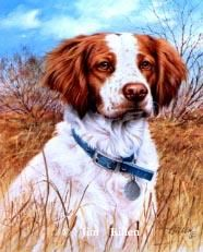 That's My Dog, Too! Brittany Spaniel<br>S/N Edition<br>13 x 15