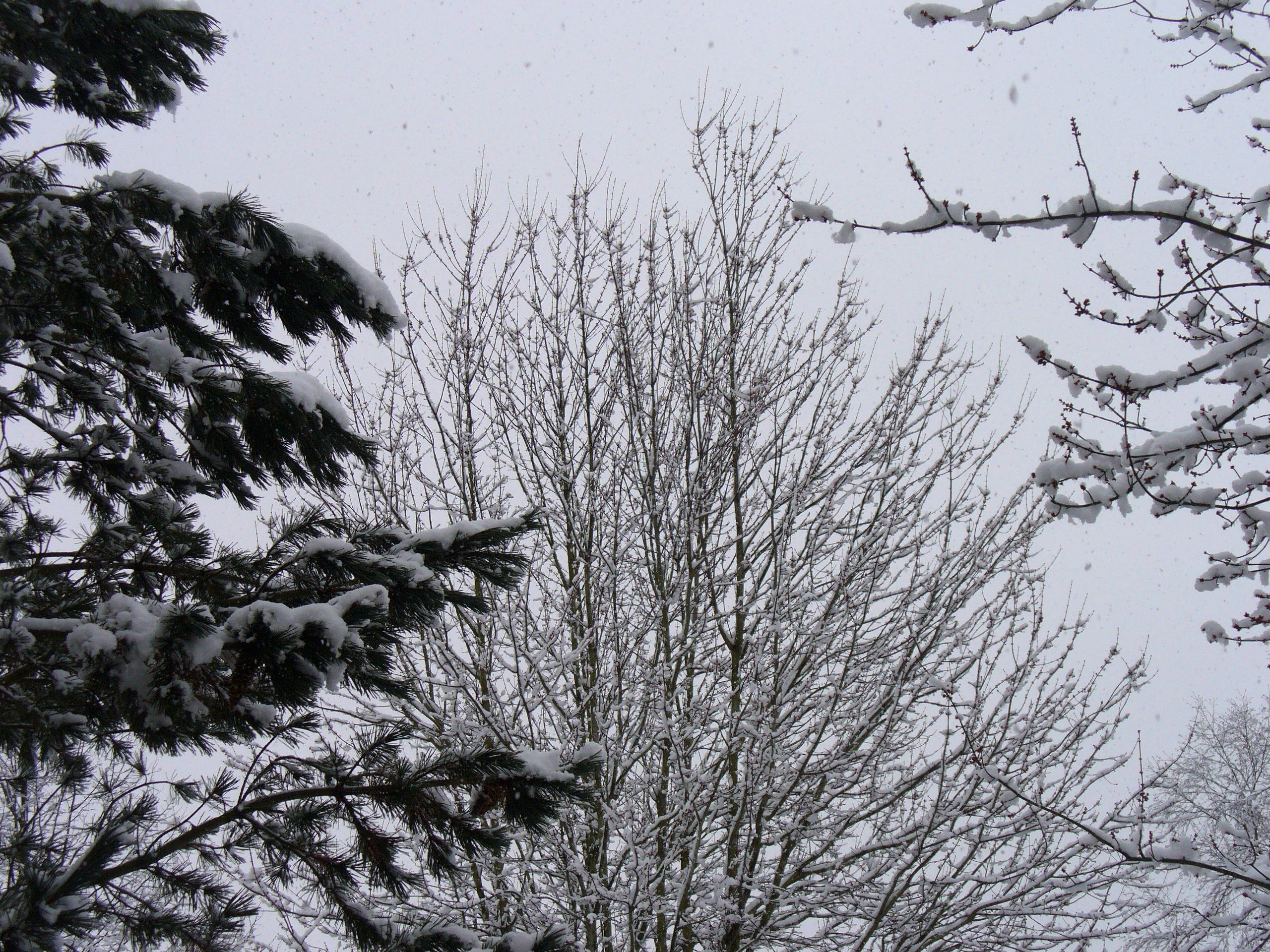 Feb. snow in Vancouver